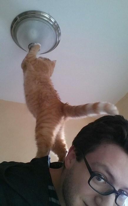 Cats help light bulb funny - 8018866944