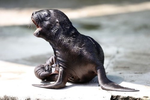 cute mom seals pups wet - 8019074560