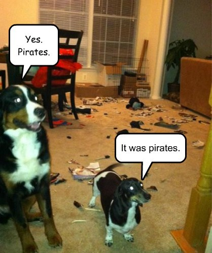 dogs,destroy,funny,pirates