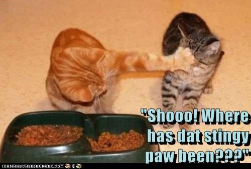 """Shooo! Where                                                                                  has dat stingy                                                                                                                      paw been???"""