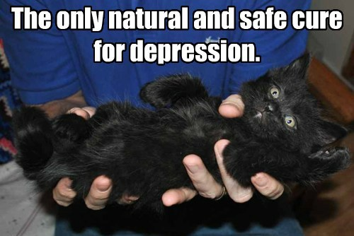 kitten cute cure depression - 8020190976
