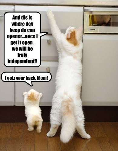 And dis is where dey keep da can opener...once I get it open , we will be truly independent!!