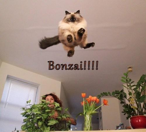 Bonzai!!!!