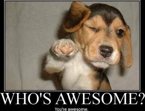 awesome,cute,compliment,dogs,puppies,national compliment day