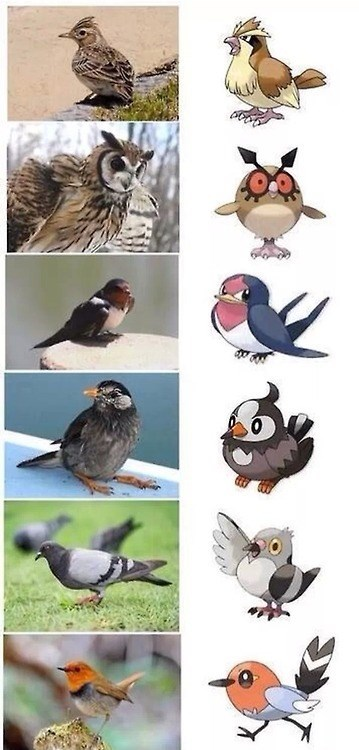 Pokémon,birds,IRL,animals