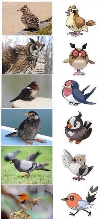 Pokémon birds IRL animals - 8020670976