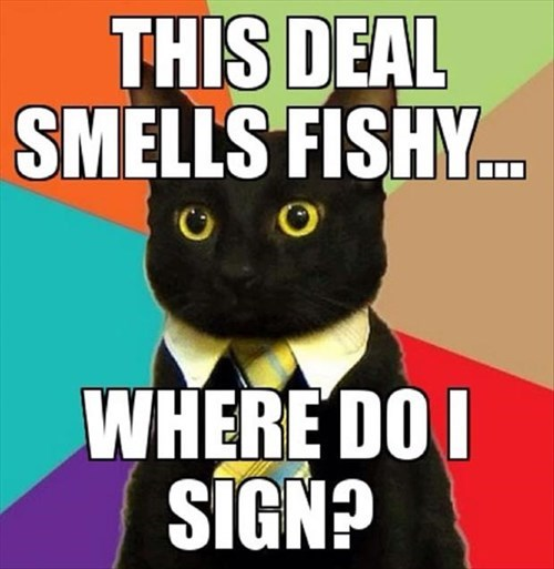 fishy Business Cat Cats funny - 8020771328