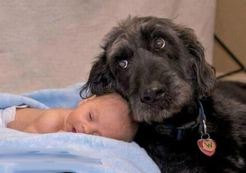 Babies dogs parenting - 8020771584