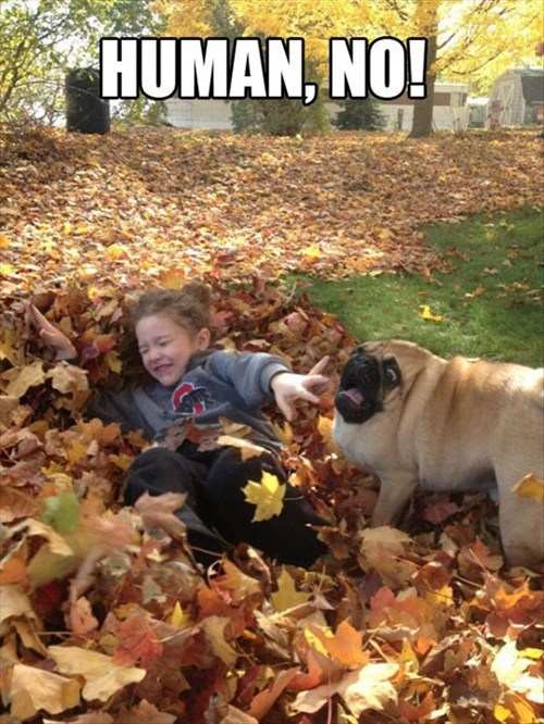 shock dogs kids cute leaves fall