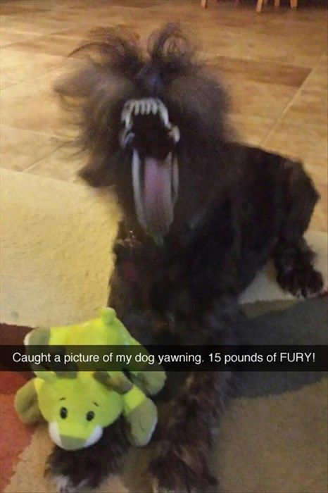 scary dogs yawning Perfect Timing fury - 8020822016