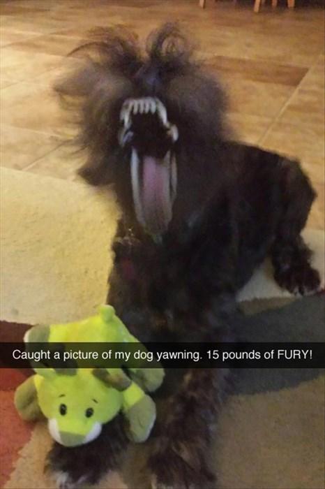scary yawning - 8020822016