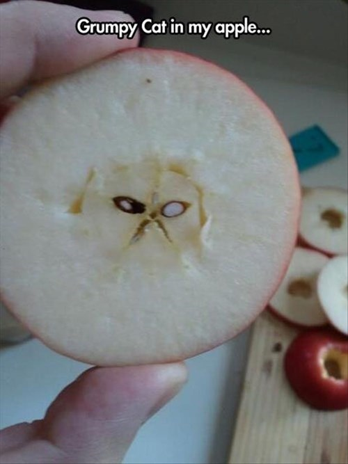 face on something,apples,Cats,funny