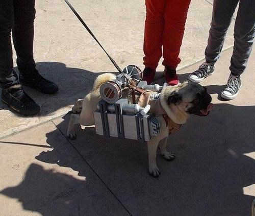 dogs cosplay anime cute pugs attack on titan - 8020847616