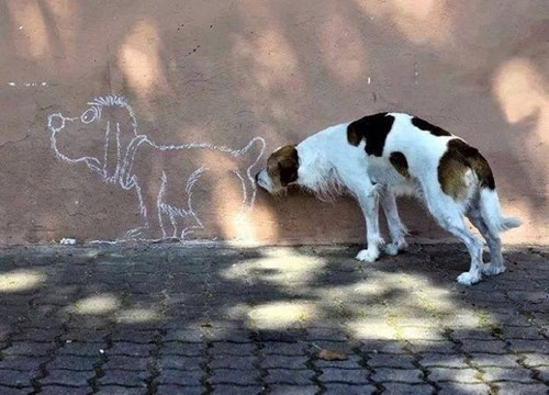 dogs,drawing,sniff,funny,instincts