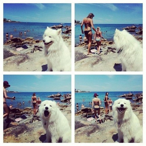 dogs,summer,beach,wingman