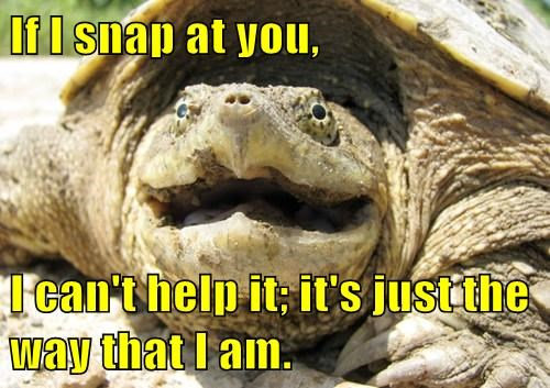 snapping turtles puns funny - 8021377536