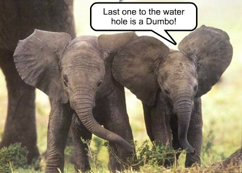 cute elephants dumbo funny - 8021383424