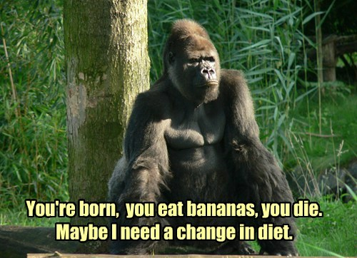 bananas,gorillas,funny,life,philosophy