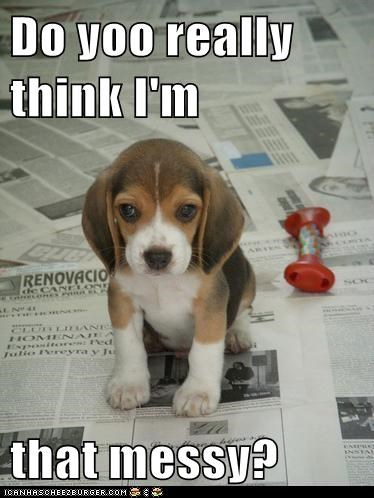 cute,dogs,funny,puppies,newspapers
