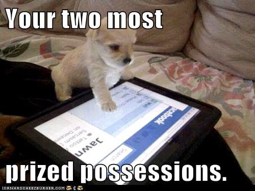 cute,dogs,facebook,puppies