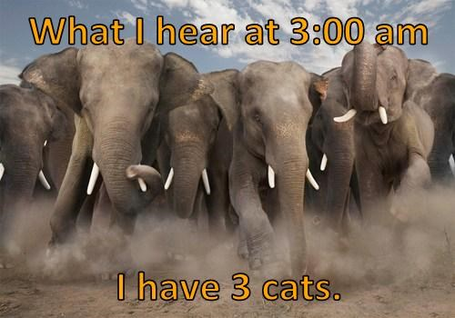 What I hear at 3:00 am   I have 3 cats.