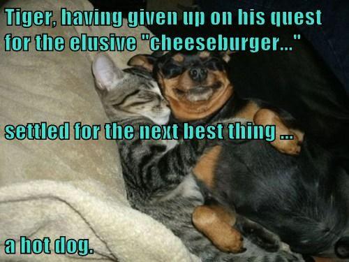 Cheezburger Image 8022514944