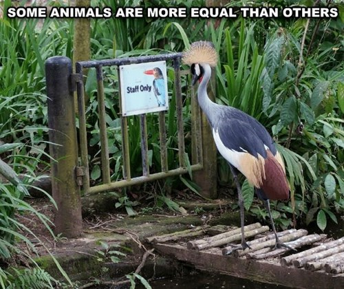 birds exotic excluded funny zoo staff only - 8023702016