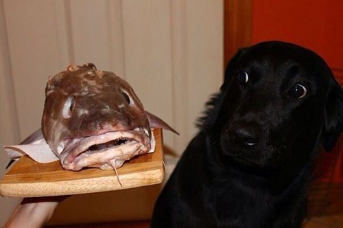 dogs fish creepy dinner funny - 8023707648