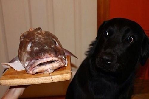 dogs fish creepy dinner funny - 8023707648