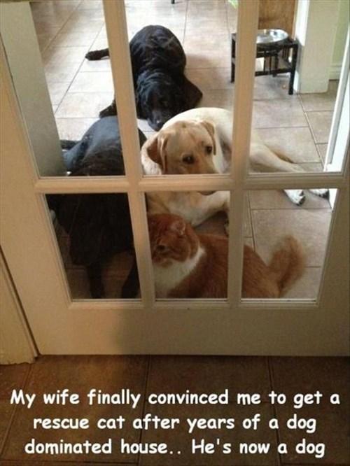 Cats cute dogs friends rescue - 8023769088