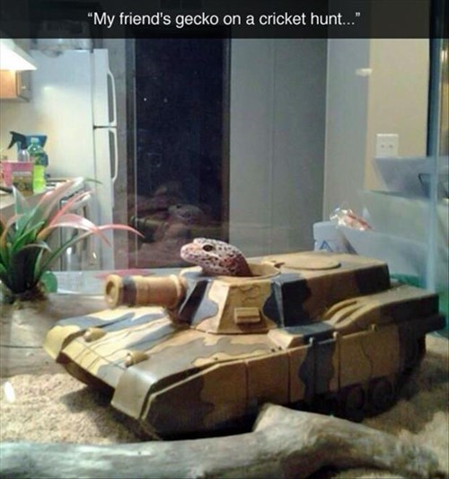 geckos,crickets,hunt,military,tank