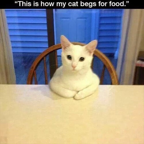 beg Cats food diplomacy funny noms - 8023790336