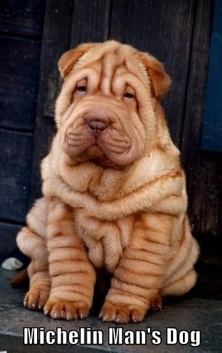 cute dogs puppies Michelin man tires wrinkles
