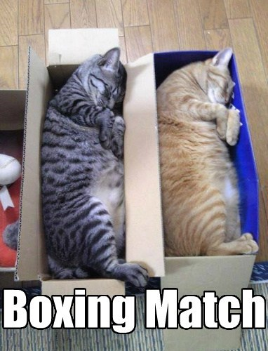 boxes puns cute naps boxing Cats - 8024846592