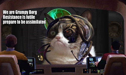 Grumpy Cat grumpy borg futile Star Trek - 8024909824