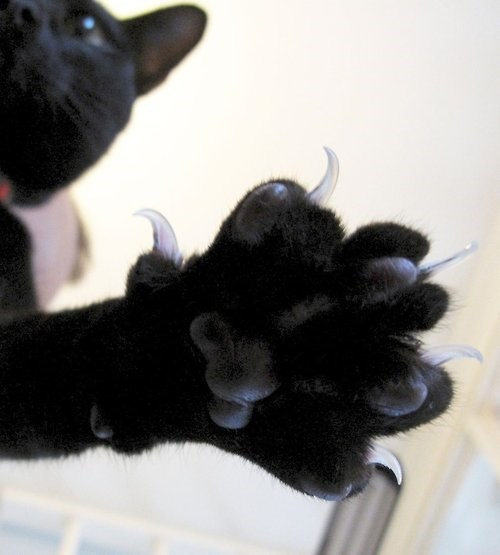 scary jellybeans claws Cats funny - 8024946688