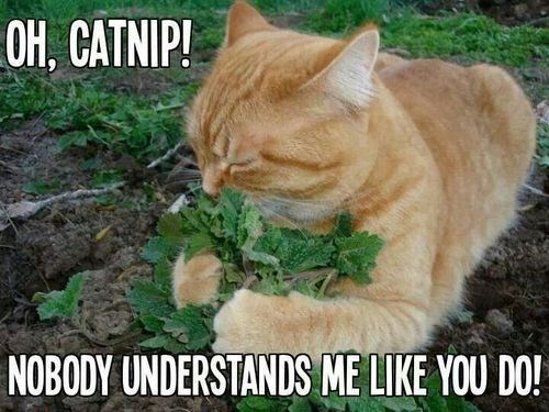 catnip garden cute love Cats funny - 8024959488