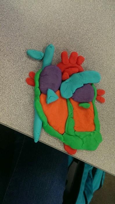 anatomy heart play-doh science funny - 8024961280