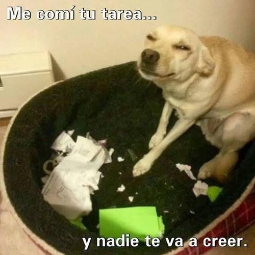 tareas FAIL Memes animales - 8024992000