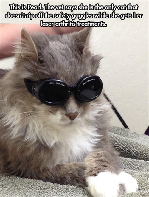 Cats cool funny vet shades - 8025143296