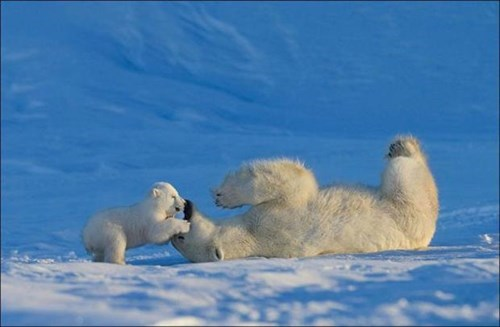 cute,cubs,funny,polar bears,mom,stinky breath
