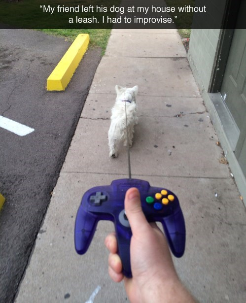 animals,dogs,nintendo,IRL,leashes,g rated,win