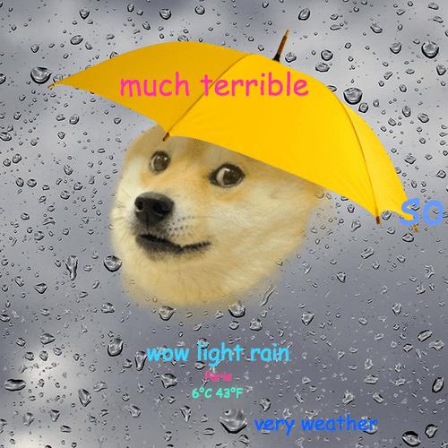 weather doge dogeweather - 8025361920