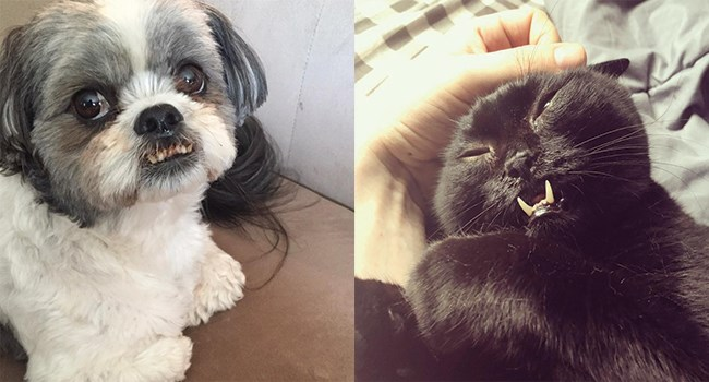 cute dog and cat with funny teeth