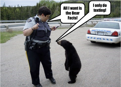 All I want is the Bear Facts!