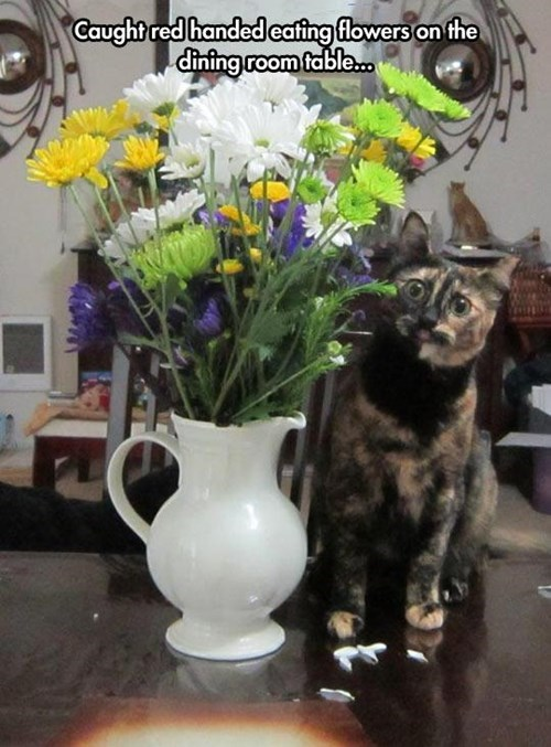 busted caught red-handed flowers Cats funny - 8025996544