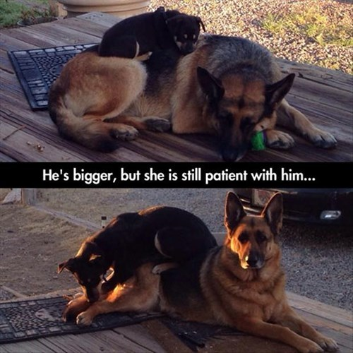 Babies puppies patience mom funny - 8026033152