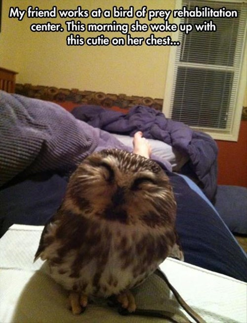 bed birds cute owls sleep - 8026035456