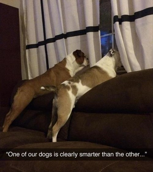 x-ray vision dogs dumb funny - 8026050560
