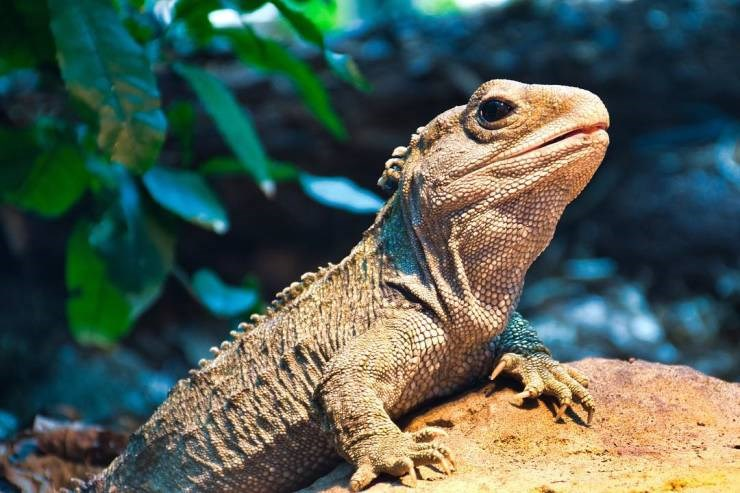 lifespan longest living creature animal crazy - 8026117
